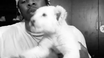Runtown Pet lion